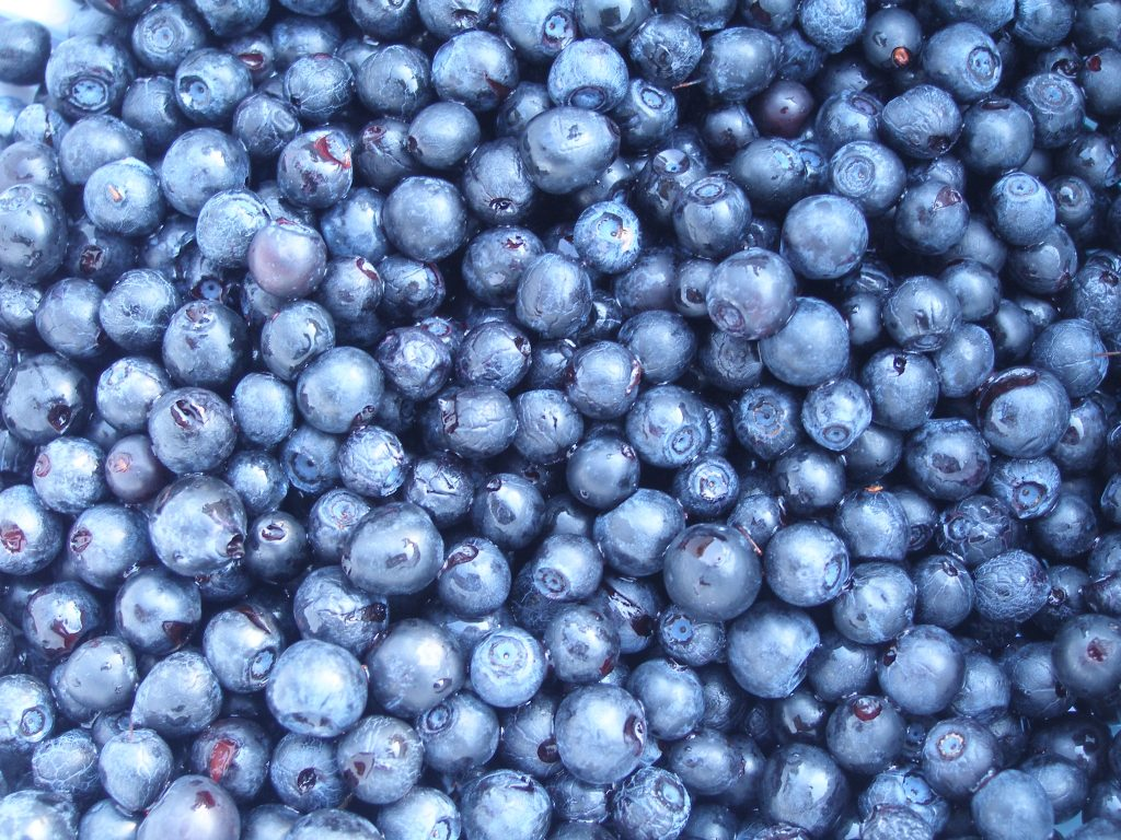 Blueberries, Vaccinium myrtillus