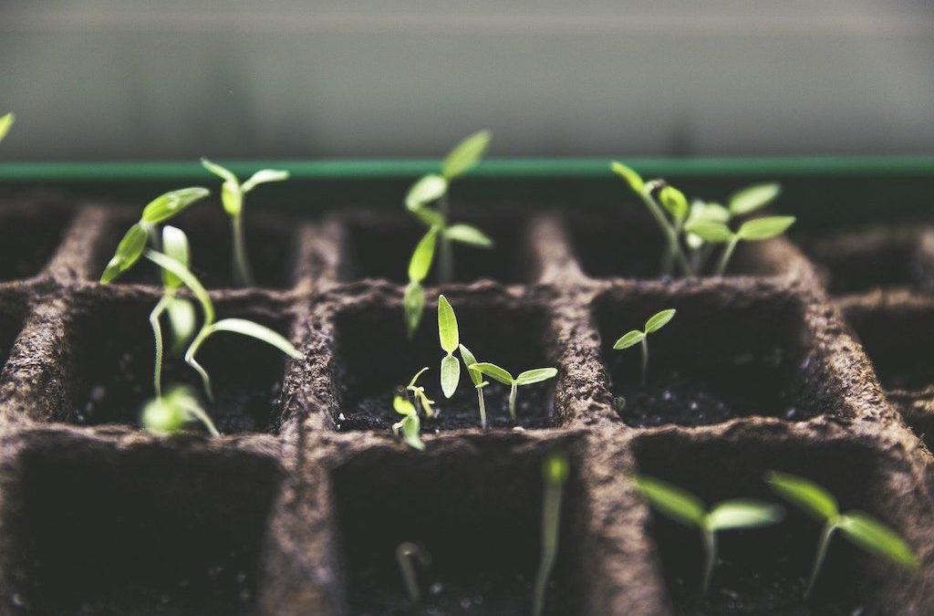 Gardening Jobs in February