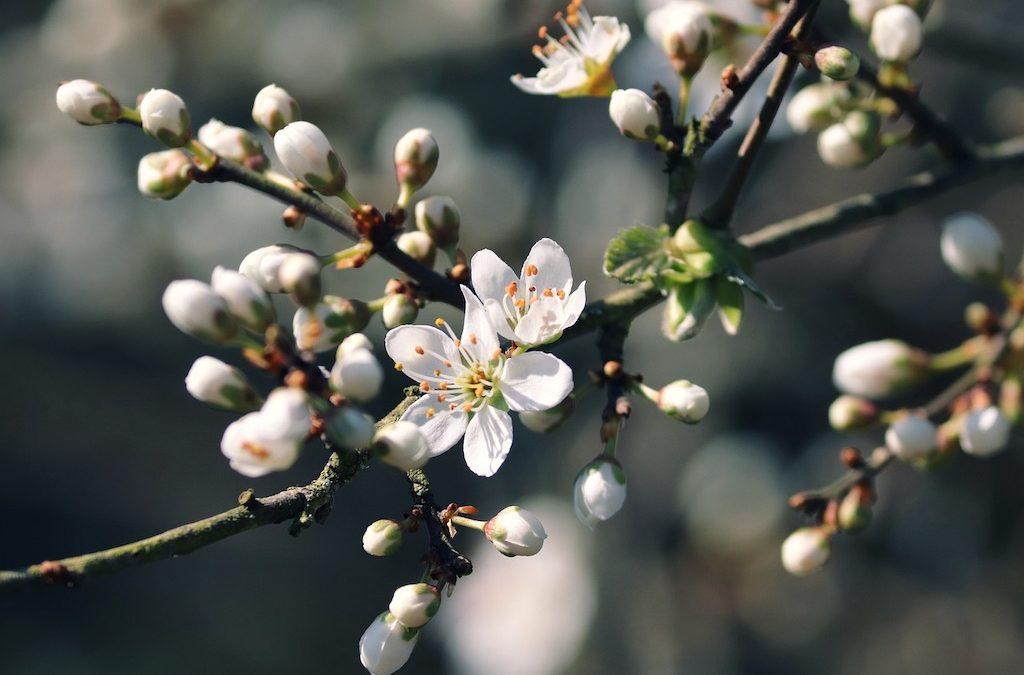 Happy Spring Equinox, 2021