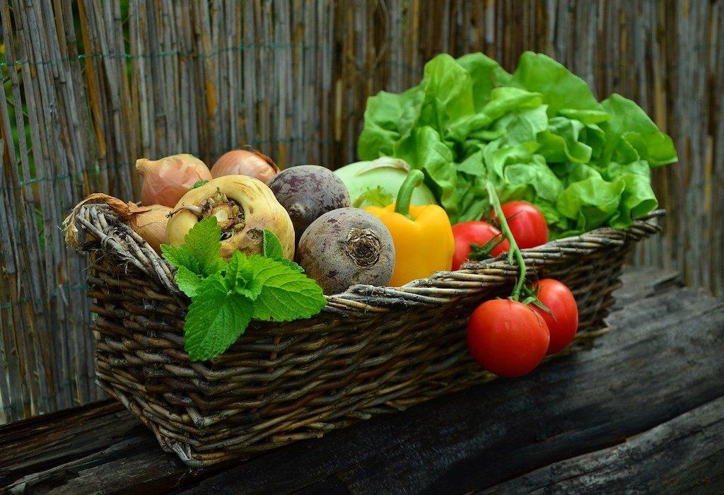 Gardening jobs in August