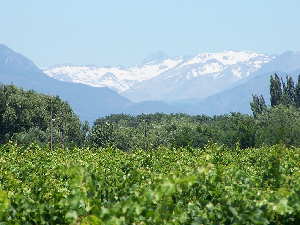 Chile Wine Valley