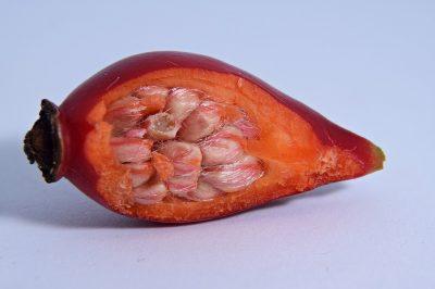 Rose hip seeds